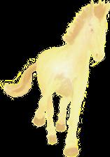 anniversaire cheval petit poney a disparu